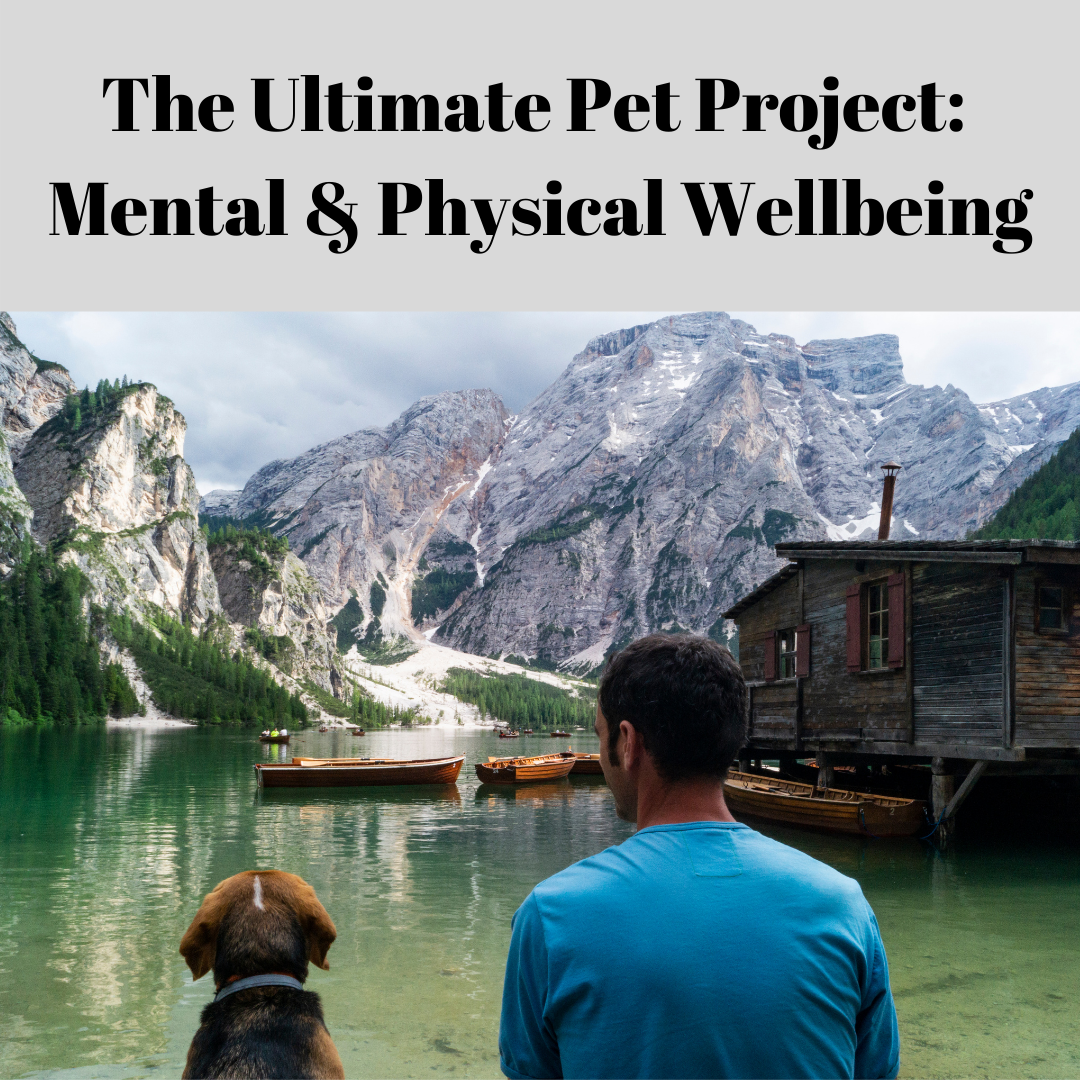Pet companion and wellbeing